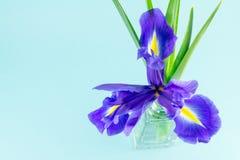 Blüht blaue purpurrote Iris mit Blättern, Draufsicht des Glasvase Lizenzfreie Stockfotos