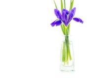 Blüht blaue purpurrote Iris mit Blättern, lokalisierte der Glasvase Stockfotos