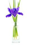 Blüht blaue purpurrote Iris mit Blättern, lokalisierte der Glasvase Stockbilder