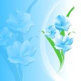 Blüht blauen Hintergrund Stockbilder