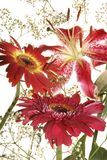 Blüht Blumenstrauß Stockbilder