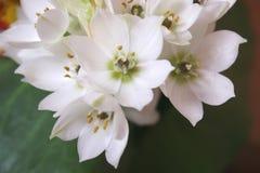 Blüht Blumenstrauß lizenzfreie stockfotos