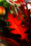 Blüht Blumenstrauß Lizenzfreie Stockfotografie