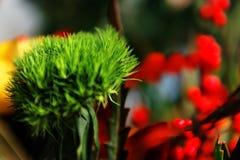 Blüht Blumenstrauß Lizenzfreies Stockbild