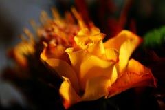 Blüht Blumenstrauß Lizenzfreie Stockbilder