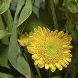 Blüht Blumenstrauß vier lizenzfreies stockbild
