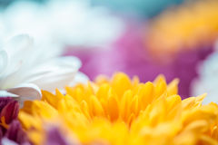 Blüht bunten Makrohintergrund lizenzfreies stockbild