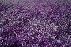 Blüht buntes im Garten Lizenzfreies Stockfoto