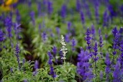 Blüht buntes im Garten Stockfotografie