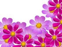 Blüht camomiles lizenzfreies stockfoto