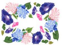 Blüht conwalia Efeu-Aster qaudrat lizenzfreie abbildung