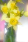 Blüht daddofil stockbild