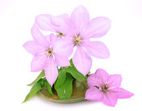 Blüht Dekoration in der Schüssel Stockbilder