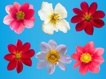 Blüht dekorative Ansammlung lizenzfreie stockfotografie