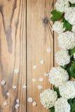 Blüht dekorativen Viburnum auf einem hölzernen Hintergrund Lizenzfreies Stockbild