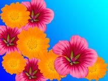 Blüht dekoratives stockfotografie