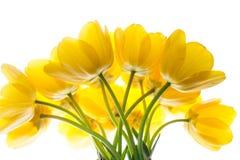 Blüht den gelben Blumenstrauß der Tulpen, der auf Weiß lokalisiert wird Lizenzfreie Stockbilder