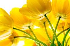 Blüht den gelben Blumenstrauß der Tulpen, der auf Weiß lokalisiert wird Lizenzfreie Stockfotos