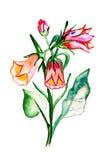 Blüht die Tulpen, die im Aquarell gemalt werden Stockfotografie