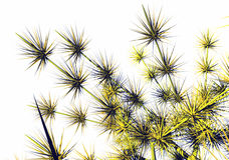 Blüht Dornen vektor abbildung