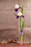 Blüht eine Iris in einem Vase Lizenzfreie Stockfotografie