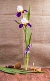 Blüht eine Iris in einem Vase Lizenzfreies Stockbild