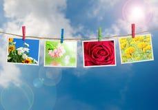 Blüht Foto Stockfotos