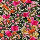 Blüht Fotohintergrund Lizenzfreies Stockbild