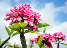 Blüht Hawaii lizenzfreie stockfotos