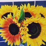 Blüht helles hübsches wachsen Stockfoto