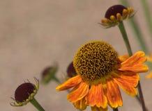 Blüht Hintergrund Lizenzfreie Stockbilder