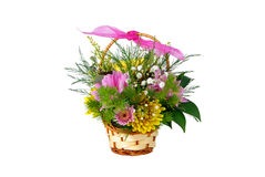Blüht hrysanthemum Stockfoto