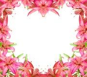 Blüht Lilie lizenzfreie stockfotografie
