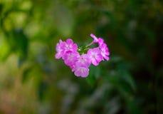 Blüht Naturgeschenkstillleben-Glückwunschsommer lizenzfreies stockbild