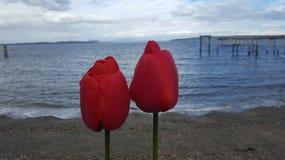 Blüht Ozean Lizenzfreie Stockbilder