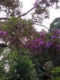 Blüht Purpur über dem Wald Stockbilder