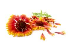 Blüht Rot Stockfotos
