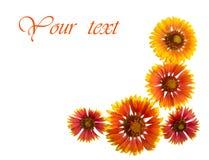 Blüht Rot auf einem weißen Hintergrund Stockbilder