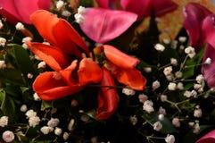 Blüht rote Rosen Stockbilder