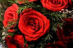 Blüht rote Rosen Lizenzfreie Stockbilder