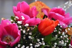 Blüht rote Rosen Stockbild