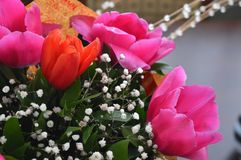 Blüht rote Rosen Stockfotos