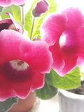 Blüht schönes Stockbilder