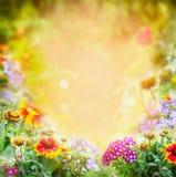 Blüht sonnigen Gartenhintergrund Stockfotos