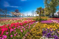 Blüht Tulpen, Palmen in der Mitte des Konstanz-Stadtparks mit Constance See Bodensee im Hintergrund stockbilder