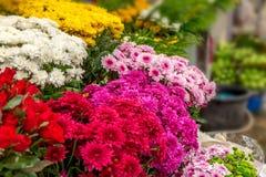 Blüht viele Farbe am Markt morgens Stockbild