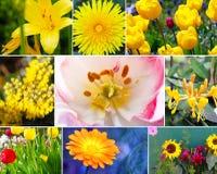 Blüht Vielzahl lizenzfreies stockbild
