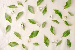 Blüht Zusammensetzung Muster gemacht von den Grünblättern und -blumen auf weißem Gewebehintergrund Flache Lage, Draufsicht Stockbilder