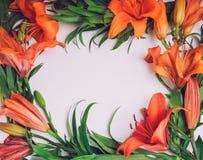 Blüht Zusammensetzung Winden Sie den Rahmen, der von den orange Lilienblumen auf weißem Hintergrund gemacht wird Kunst, exotisch, stockfotos