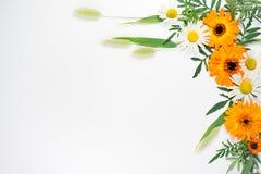 Blüht Zusammensetzungsbild Stockfotos